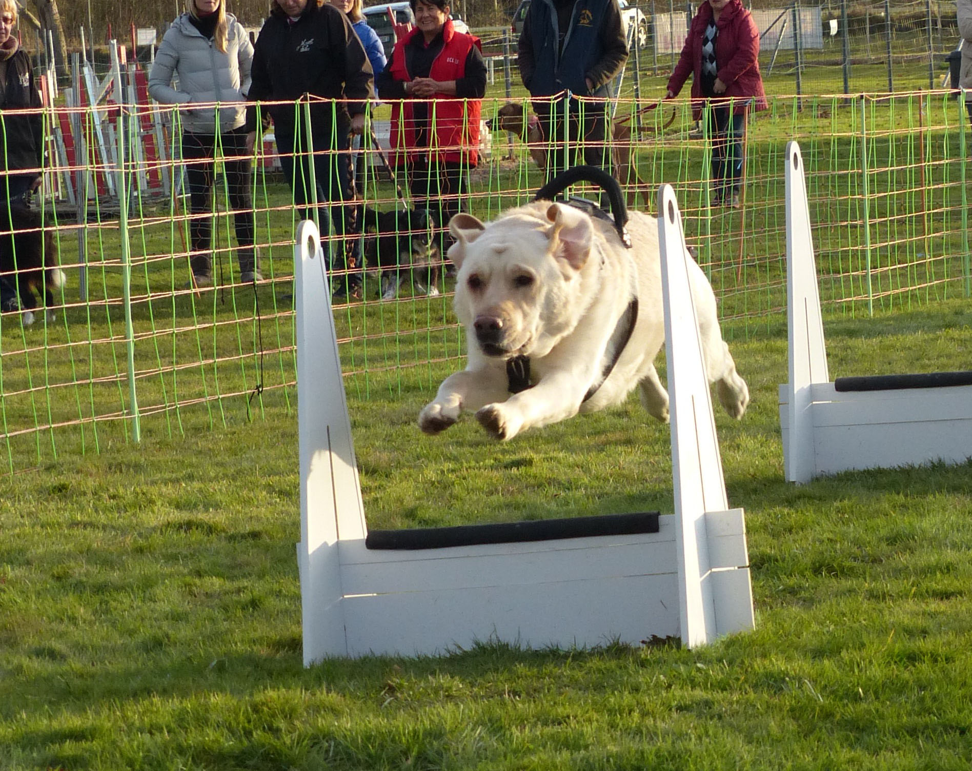 CONCOURS FLYBALL